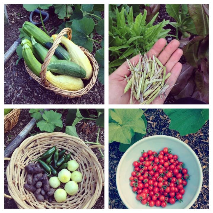 GardenHarvest8.18.14